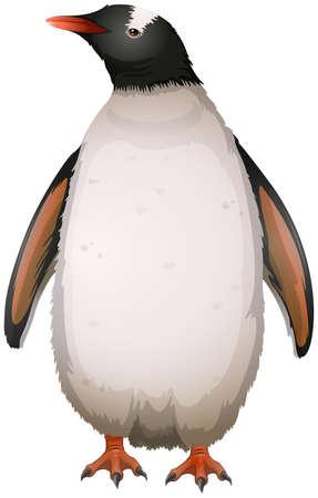 Illustration of a gentoo penguin Vector