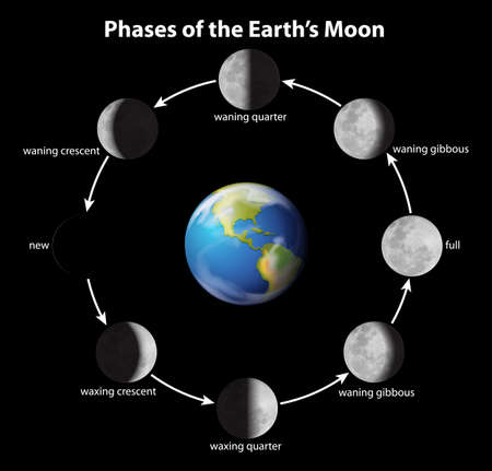Phases on the Moon as seen from Earth Vector