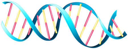 nuclei: Illustration of the deoxyribonucleic acid Illustration