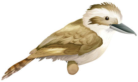 spines: Illustration of a kookaburra