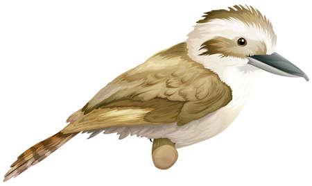 insecta: Illustration of a kookaburra