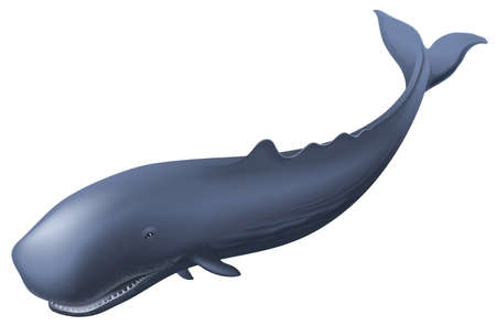 flukes: Illustration of a sperm whale Illustration