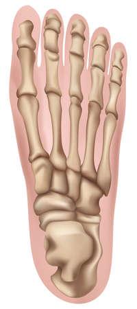 인간의 발 그림 일러스트
