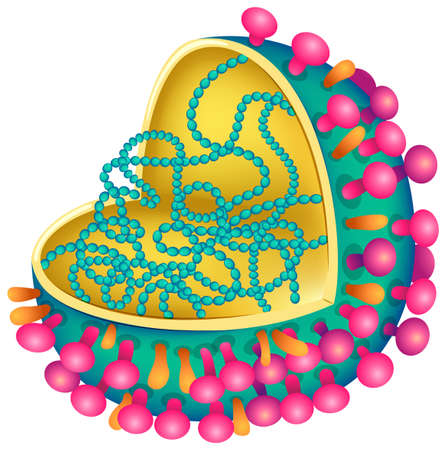 neuraminidase: Illustration of the influenza virus Illustration