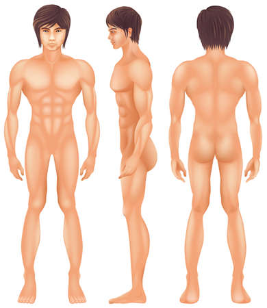 Illustration showing the human body Vector