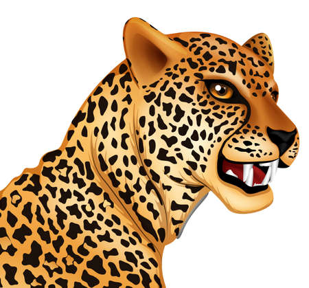 growling: Illustration showing the cheetah
