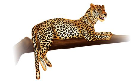 morphology: Illustration showing the cheetah