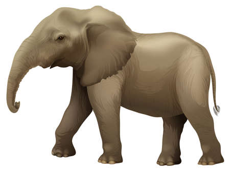 Illustration showing the african elephant Vector