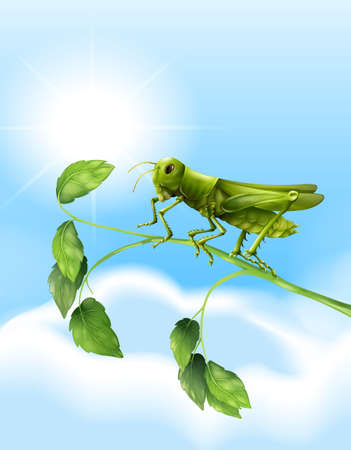insecta: Illustration showing the grasshopper