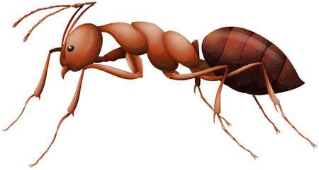 tarsus: Illustrazione che mostra la formica Vettoriali