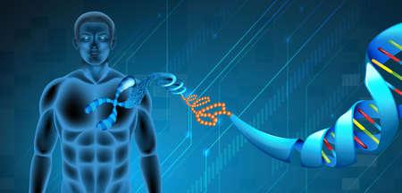 nucleotides: Ilustraci�n de la estructura del �cido desoxirribonucleico
