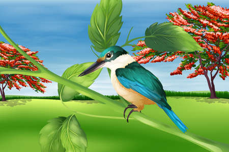 insecta: Illustration showing the kingfisher