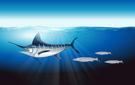 Illustration showing the atlantic blue marlin