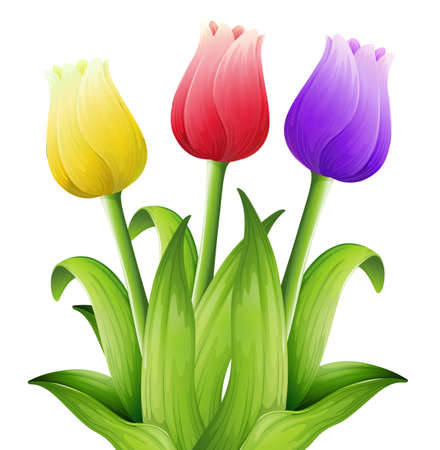 Illustration showing the tulips Stock Vector - 21637772