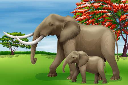 locomotion: Illustration showing the elephant Illustration