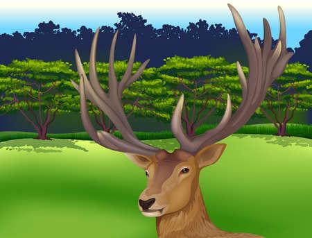 fallow deer: Illustration showing the male deer Illustration