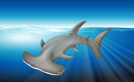 caudal: Illustration of a hammerhead shark