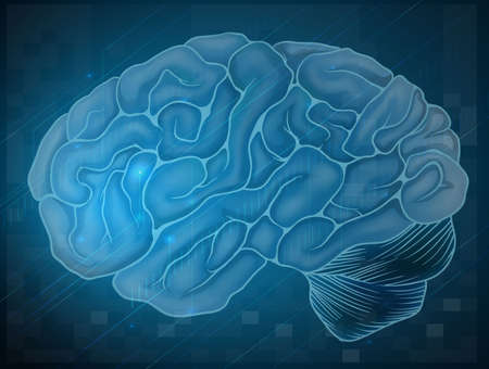 Illustration of a brain Vector