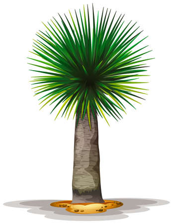 treelike: Illustration of the Dracaena draco on a white background