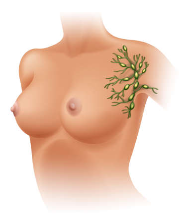 Illustration of the axillary lymph nodes on a white background Vector