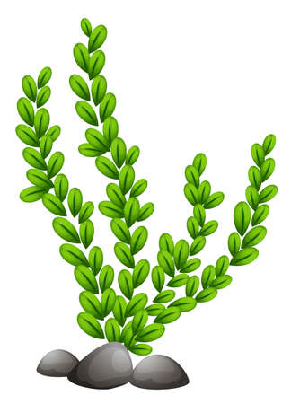 Illustration of a Pteridophyta on a white background Vector