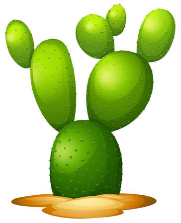 microdasys: Illustration of the Opuntia microdasy on a white background Illustration