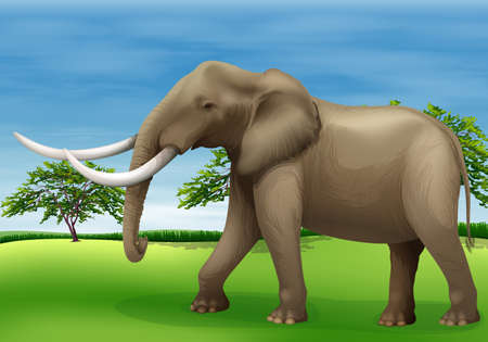 herbivorous: Illustration of the elephant Illustration