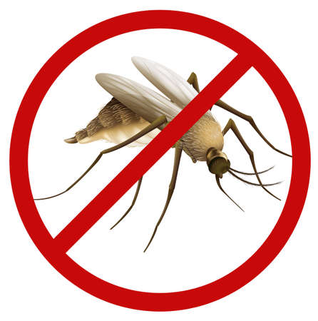 pupae: Illustration of a mosquito on a white background Illustration
