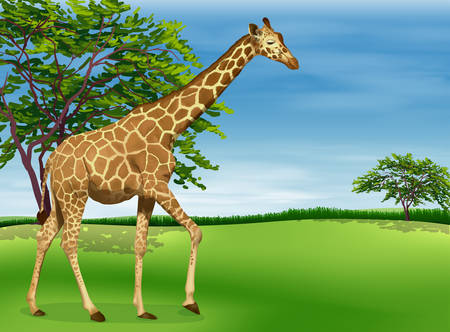 g giraffe: Illustration of a giraffe