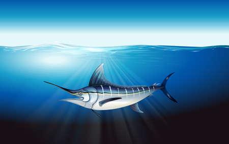 chordata: Illustration of a marlin