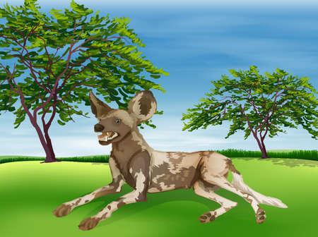 chordata: Illustration of a hyaena