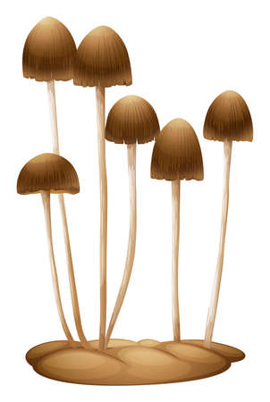 papilla: Illustration of the Psilocybe mexicana on a white background
