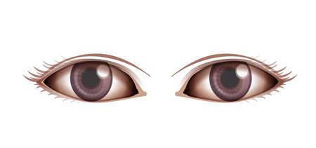 eyelids: Illustration showing the Human eye on a white background