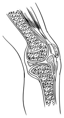 Illustration showing the Anatomy of the knee joint Illustration