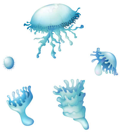 Illustration showing the Jellyfishes on a white background Stock Vector - 22730330