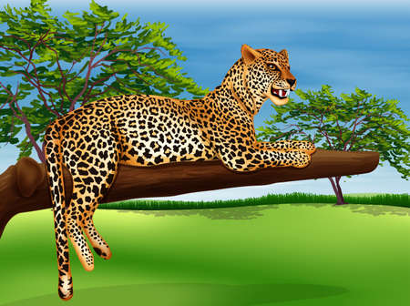 Illustration showing a leopard lying above the branch of a tree
