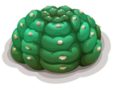 plantae: Illustration of astrophytum asterias kikko on a white background