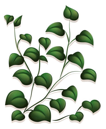Illustration of the leaves on a white background