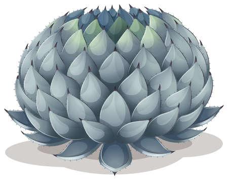 agave: Ilustración de un Agave parryi en un fondo blanco