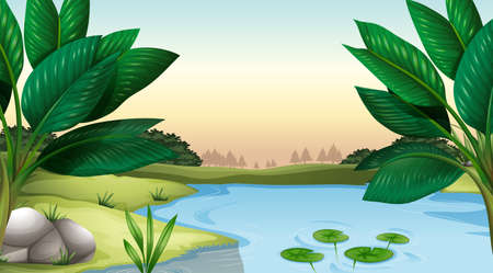 plantae: Illustration of a pond Illustration
