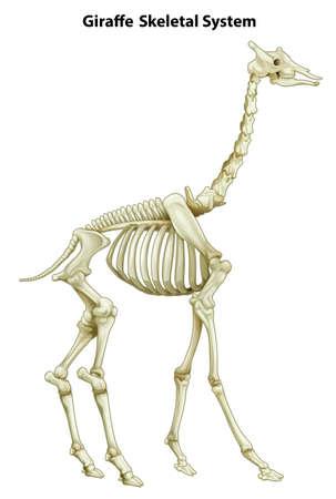 白い背景上のキリンの骨格系のイラスト