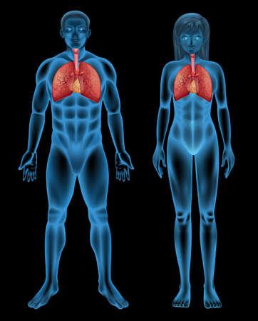 diffusion: Illustrazione del sistema respiratorio