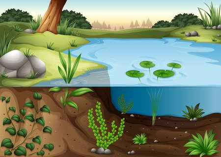池の生態系のイラスト