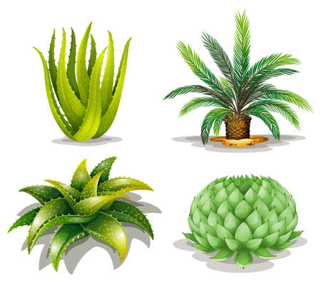 Illustration of the cactus plants on a white background