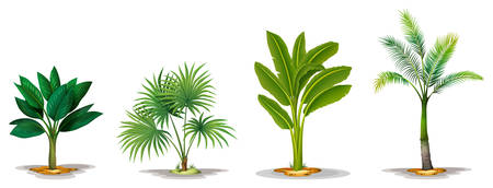 ornamental shrub: Illustration of the different trees on a white background