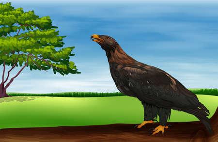 chordata:  Illustration of a big bird