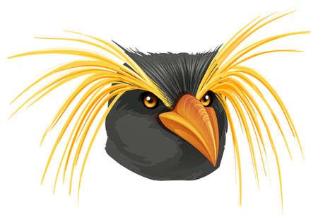 Illustration of a Rockhopper penguin on a white background Stock Vector - 23977119