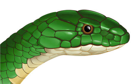Illustration of a generic snake on a white background Vector