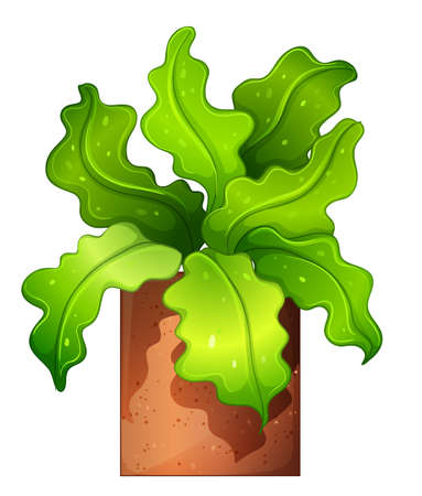 plantae: Illustration of a houseplant in a pot on a white background