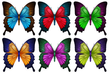 nymphalidae: Illustration of the colorful butterflies on a white background Illustration